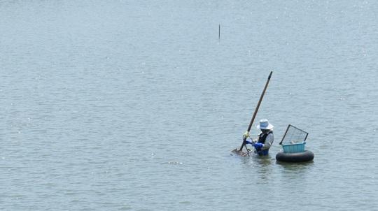志登茂川シジミ漁